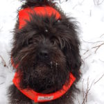 Photo of a cute fuzzy dog in winter.