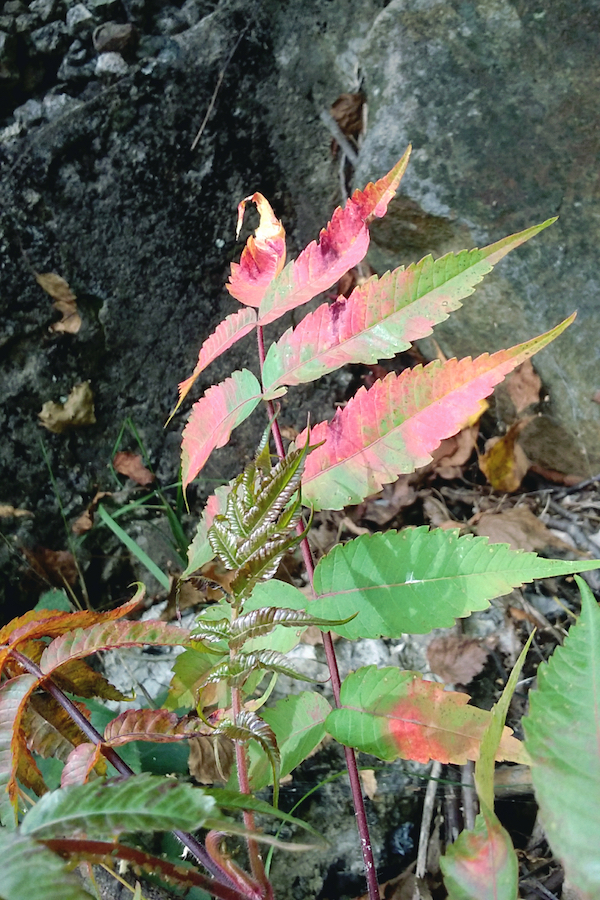 Colorful leaf and plant photo by Sara Dimmick.