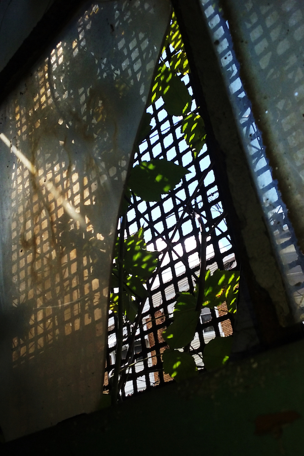 Photo of light coming through a window grate by Sara Dimmick.